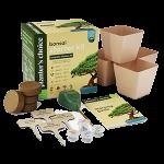 comprar-kit-de-cultivo-iniciacion-bonsai